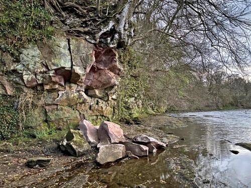 Jock's Pool tree