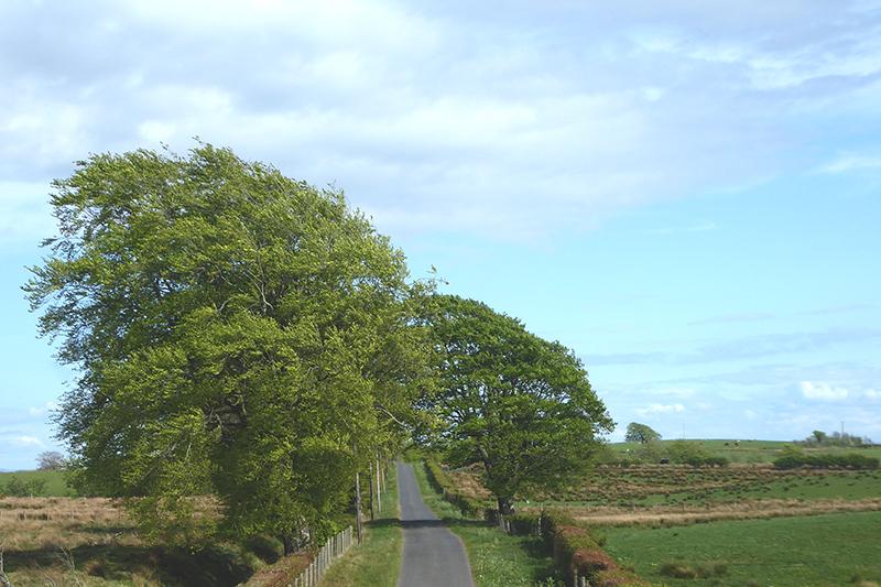 trees chapelhill