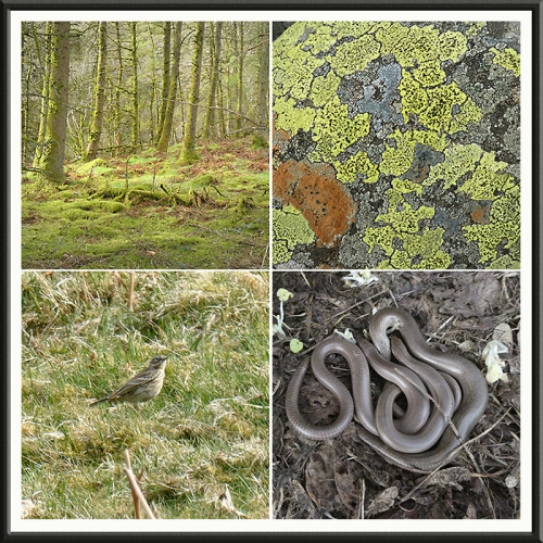 trees, lichen, meadow pipit, slow worms