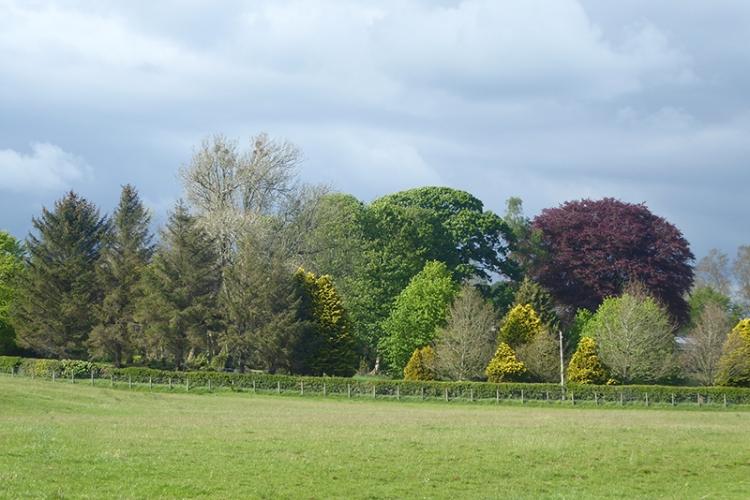 trees woudhouselees