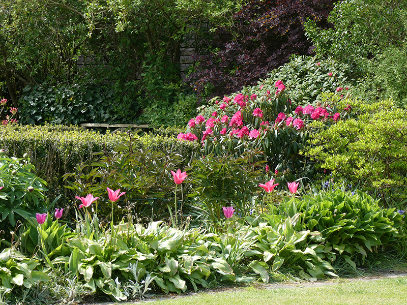 tulips and rhododendron blend