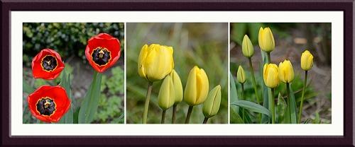 tulips panel