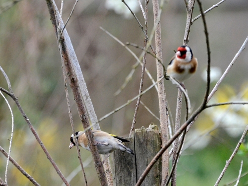 two goldfinches fake tree