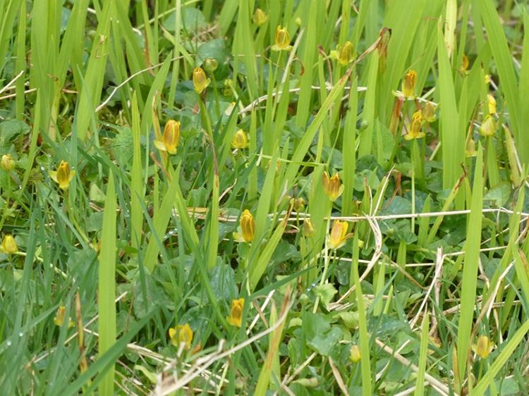 yellow flowers beside esk