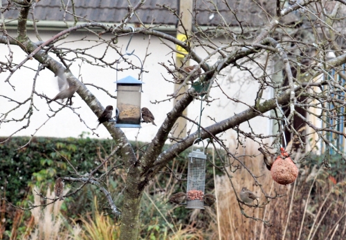 ninesparrows