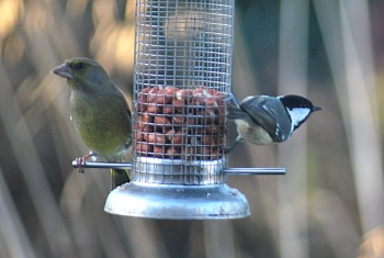 coal tit and greenfinch