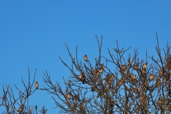 morning flock