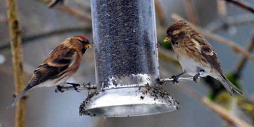 redpoll and partner