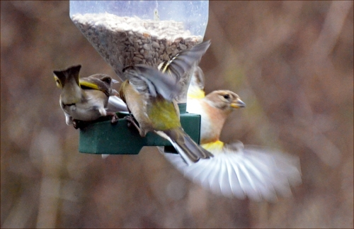 feeder frenzy