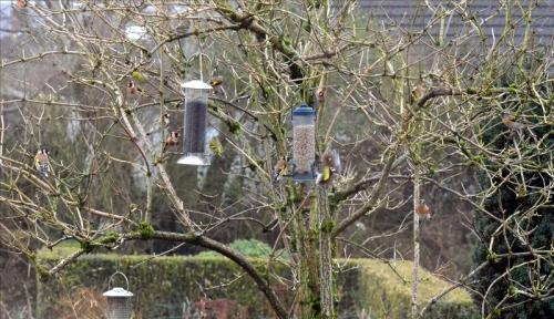 tree crowd