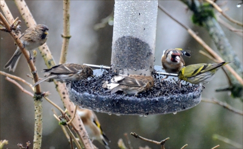 and a goldfinch
