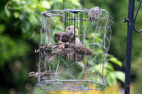 fortress with five sparrows