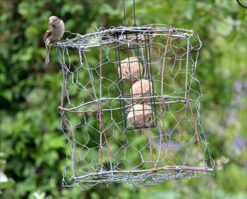 fotress plus sparrow