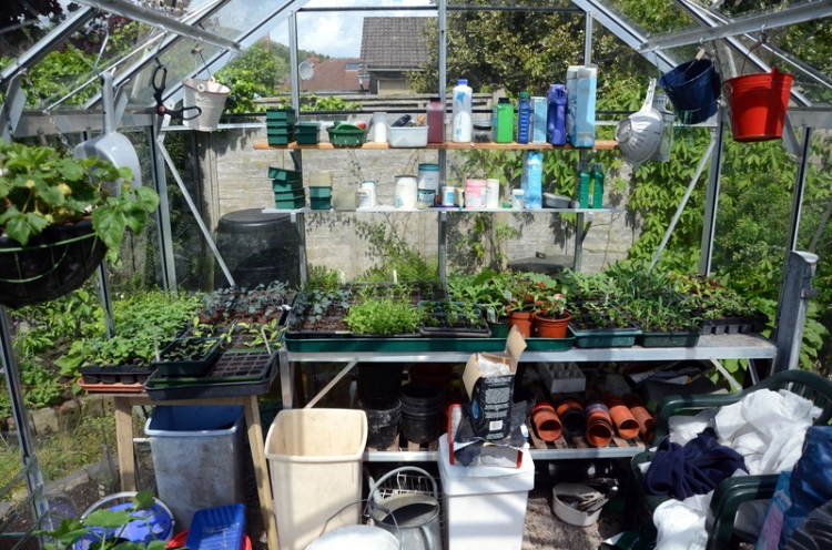 busy greenhouse
