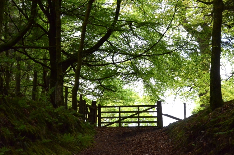gate in the wood
