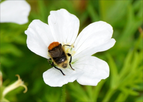 bee on white