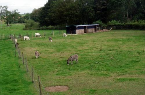 donkey flock