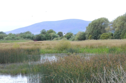 Another view of Criffel across a pond
