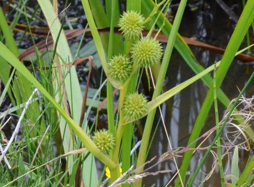 Curious plant