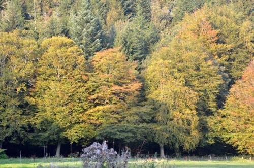 trees turning 2