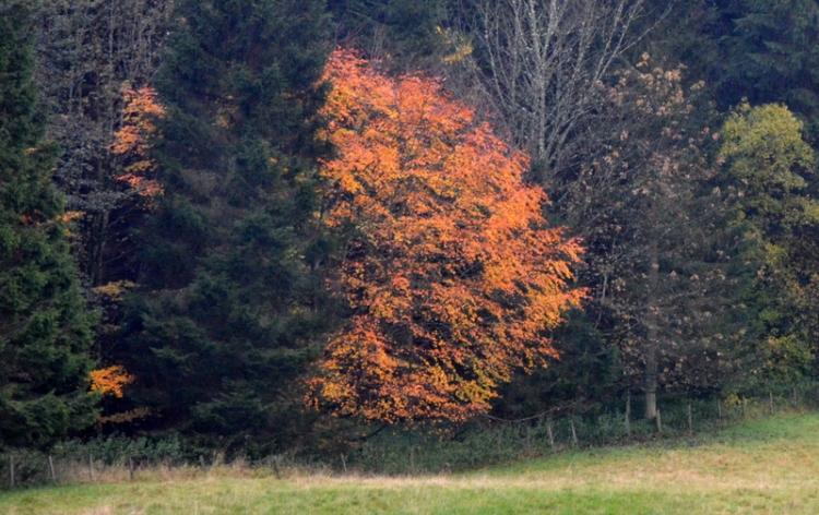 Across the Murtholm field