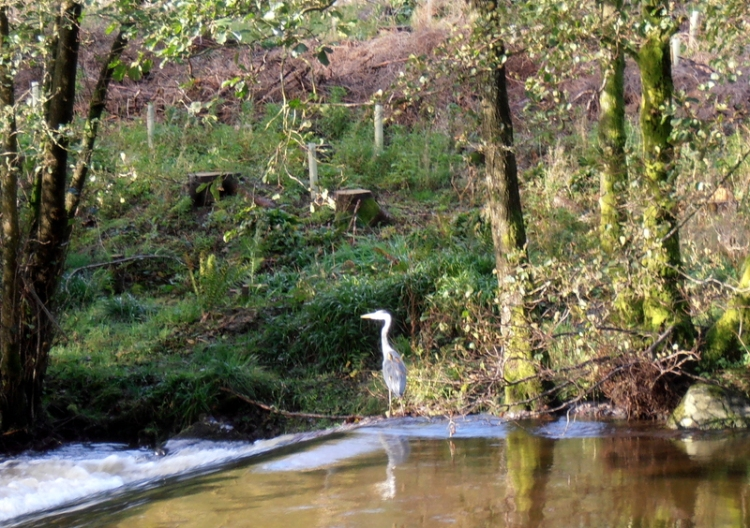 heron at Pool Corner
