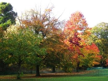 autumn Kenwood