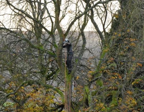 man in tree 8.55