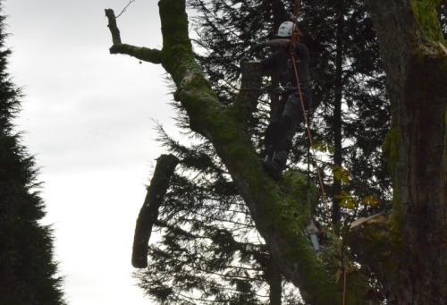 branch falling 11.19