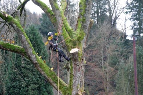 tree climbing in style