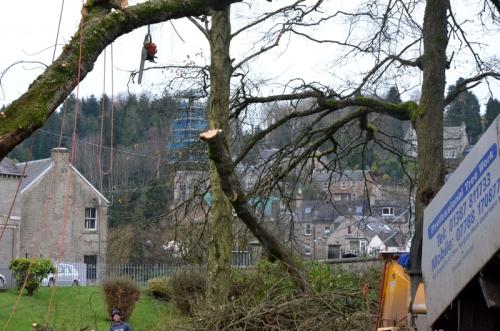 big branch falling