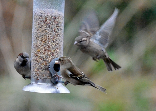 Action at the seed feeder