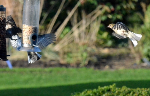Chaffinch missile