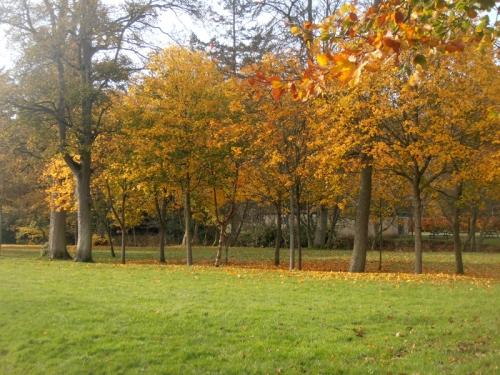 Park at Hawick