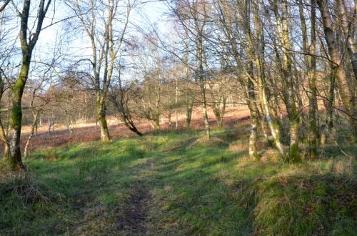 Whita woods