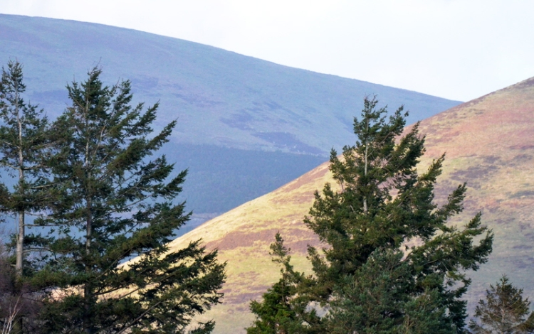 sunny slope