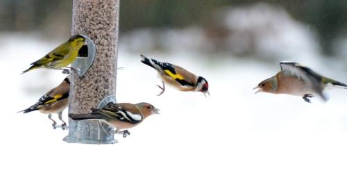 bird activity