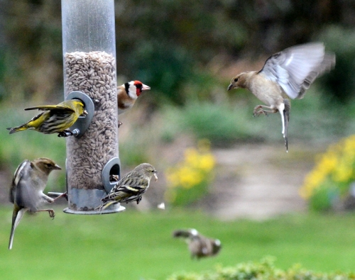 Variety at the feeder
