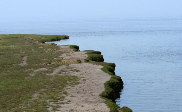 grassy shore
