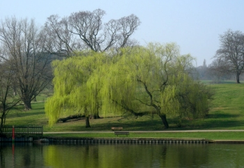 Kenwood Mar 23rd 2012 023