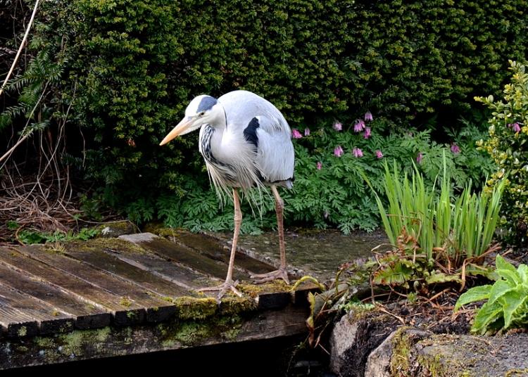 Heron on bridge