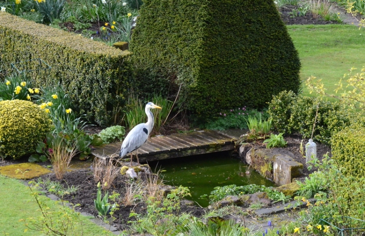 heron at pond