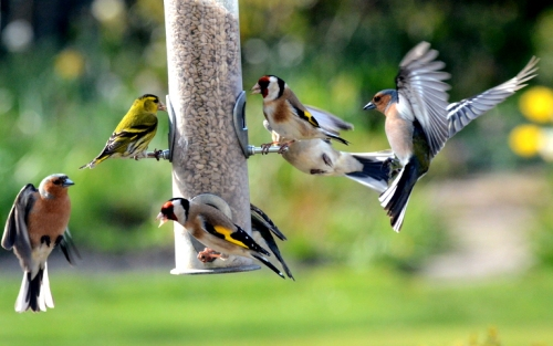 mixed birds
