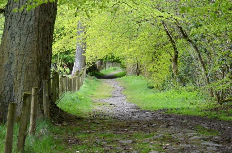 path past the pheasant pens