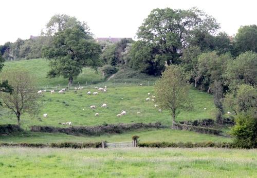 Hippy's Farm