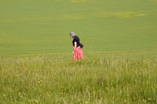 Mrs Tootlepedal in a meadow