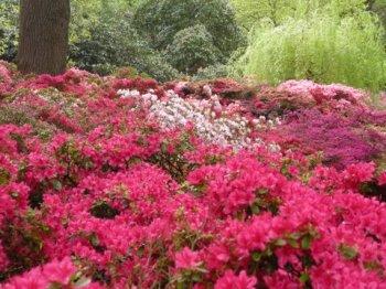 Richmond Park and Isabella Plantation May 2012