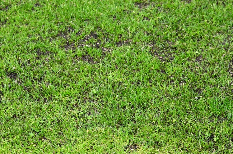 A very interesting picture of some grass
