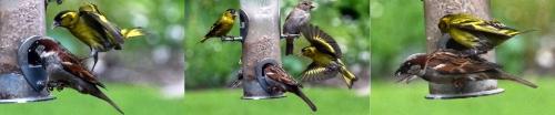 bird trampling