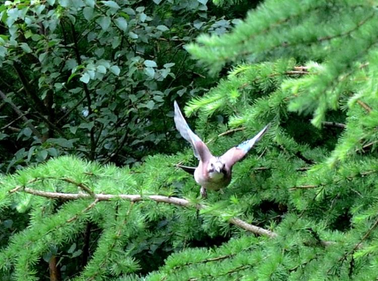 unknown bird flying in